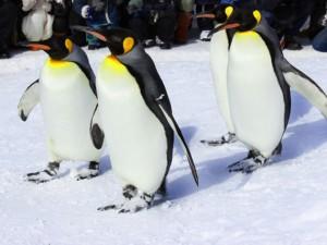 雪道、歩く、ペンギン(4x3)