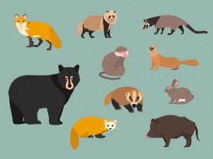 野生の動物